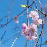 神奈川県公立高校 合格可能性 80 %基準値 2022